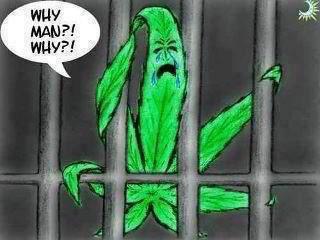 cannabislegal