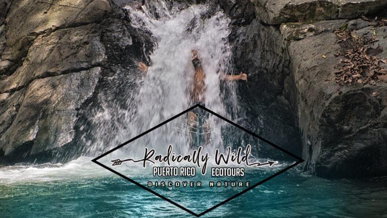 radicaly wild ecotours Puerto RIco