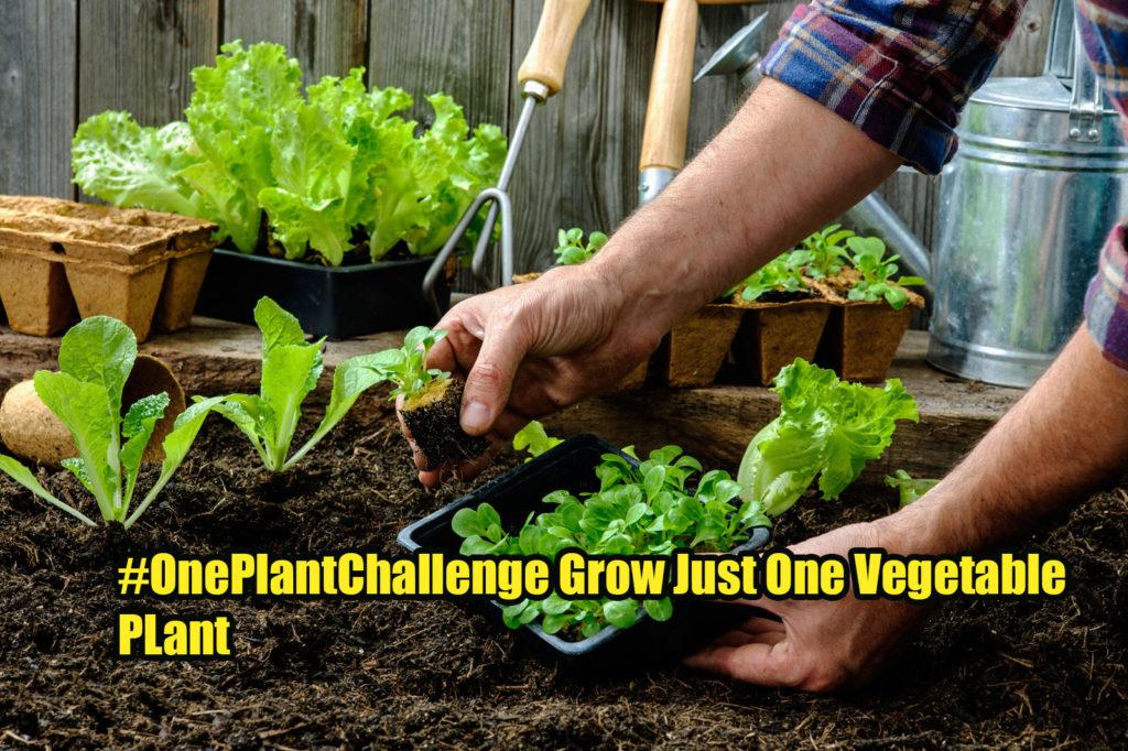 one plant challenge
