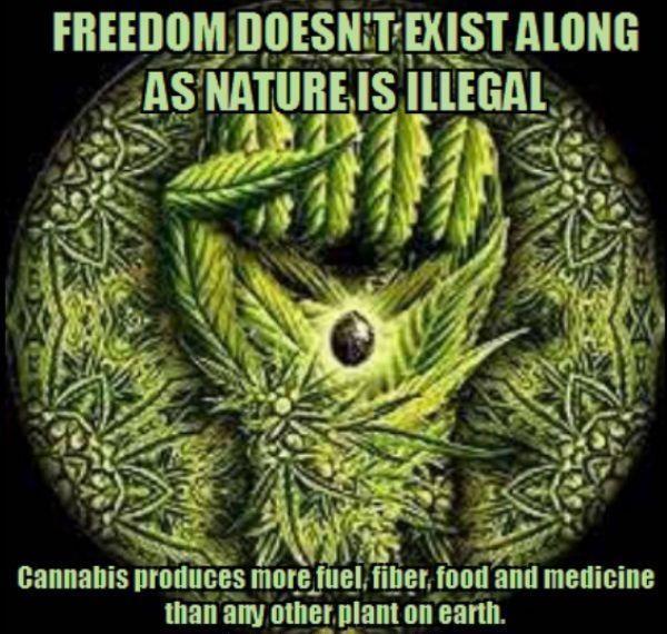 cannabisprooduces