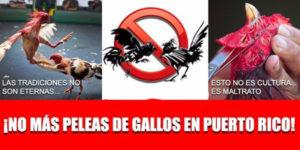 ¿Por qué se debe prohibir las peleas de gallos en Puerto Rico