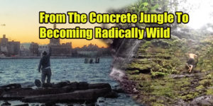 from the conrete jungle to becoming radically wild