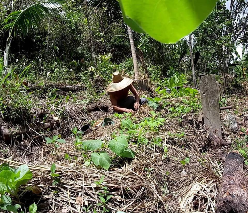 growing food in Puerto rico