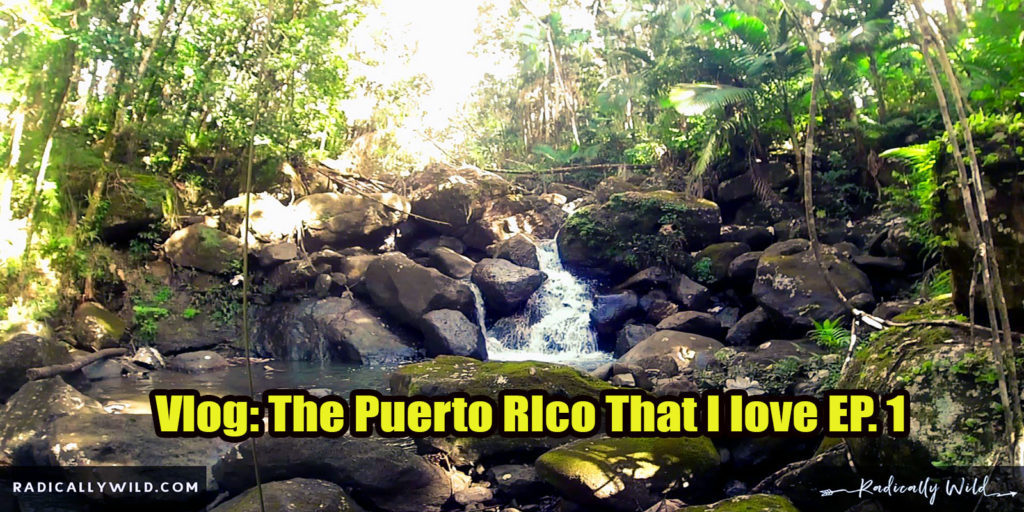This is the puerto rico that I love
