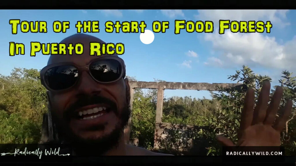 food forest puerto rico